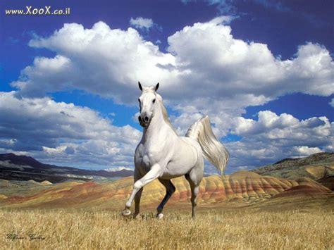 רקעים למחשב, תמונות, שומר מסך, שומרי מסך של סוס לבן
