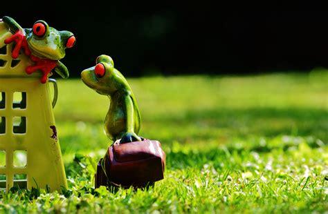 fotos gratis cesped linda decoracion verde rana