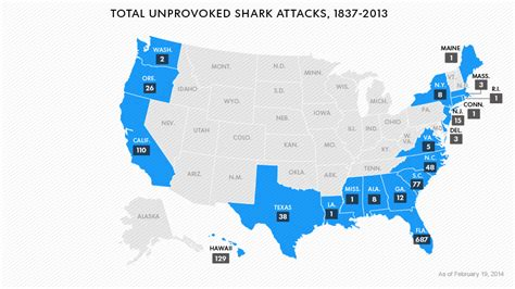 shark attacks  rising  youre   times