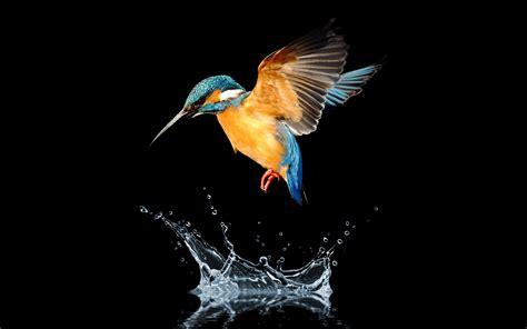 Download cool phone wallpapers at vividscreen. Blue tailed hummingbird HD | Hummingbird wallpaper, Bird wallpaper, Pet birds