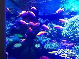 L Form Aquarium : the masterpiece aquarium of david saxby reef builders the reef and marine aquarium blog ~ Sanjose-hotels-ca.com Haus und Dekorationen