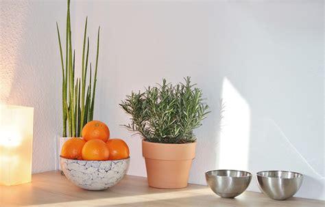 plante cuisine decoration idée déco une plante artificielle dans votre maison