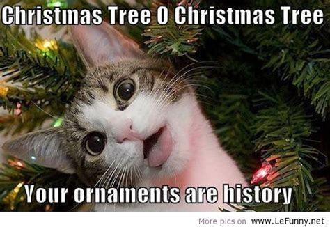 Christmas Cat Memes - animal jokes page 50 zoomumba