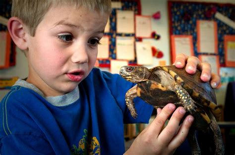 picture young boy holding box turtle portraying