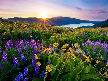Flowers Mountain Lake Desktop Sunrise Morning Meadow