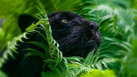 Cool Wallpapers Of Animals - cool animal wallpapers 63 images