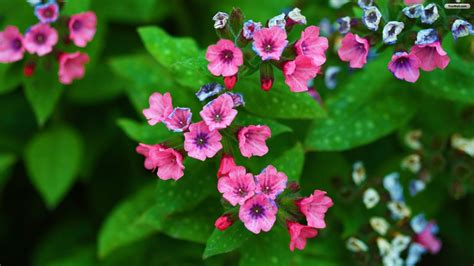 Pink Flowers Names And Pictures Flowerwallpaperorg