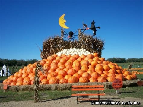 Rombachs Pumpkin Patch by Rombach Pumpkin Patch Website Nalmesida