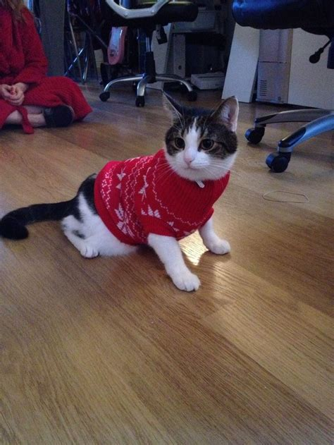 cat sweaters for cats sweater cats cats