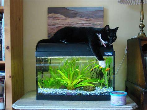 clareeagles planted tanks photo id  full version