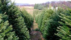 Labor of Love: The Story of One Christmas Tree Farm - Racked
