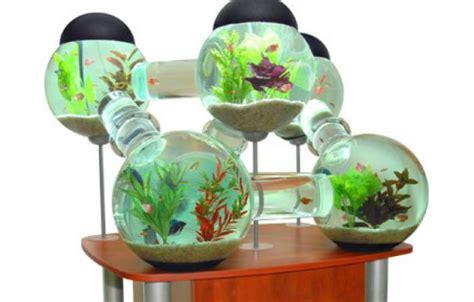crazy aquariums   house