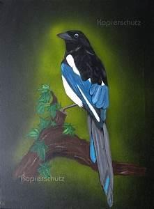 Elster Vogel Vertreiben : die besten 17 ideen zu elster vogel auf pinterest raben ~ Lizthompson.info Haus und Dekorationen