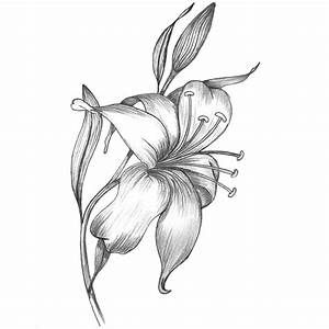 pencil sketch - Lily flower mespilia.com | Drawing ...