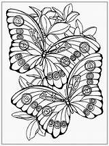 Butterfly Adult Coloring Realistic sketch template