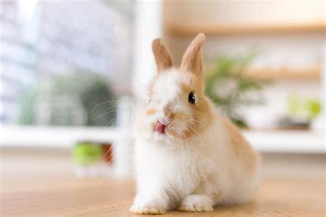 2 Ideas for Cute Rabbit Photos