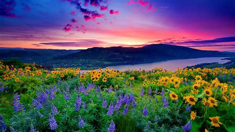 Captain America Wallpaper Hd Nature Landscape Yellow Flowers And Blue Mountain Lake Hills Red Cloud Sunset Hd Desktop
