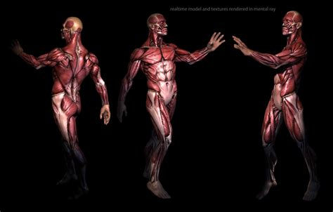 Real Time Anatomy By Mojette On Deviantart
