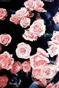Pink Roses Pictures, Photos, and Images for Facebook ...