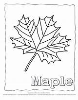 Maple Syrup Coloring Drawing Getdrawings Sugaring sketch template