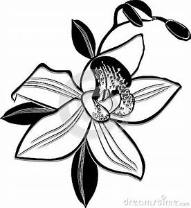 Black Orchid Clipart (57+)