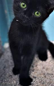 black Cat Portrait - Turquoise Eyes by art-it-art on ...
