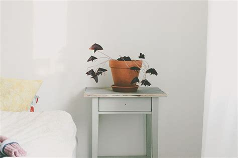 refroidir une chambre 25 best ideas about chambres vertes pourpres on