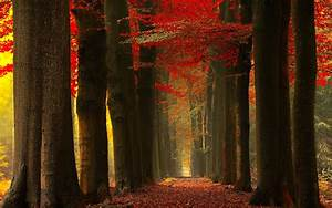Wallpaper, Sunlight, Trees, Landscape, Forest, Fall, Leaves, Nature, Red, Mist, Path, Tree