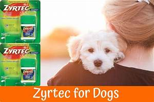 Zyrtec For Dogs The Best Dog Allergy Medication A Guide