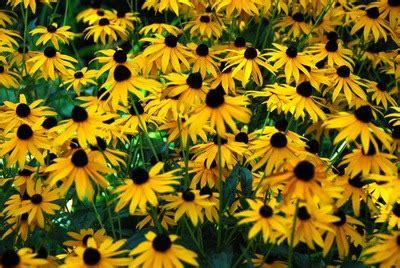 stauden pflanzen wachstum anlegen saeen ernten