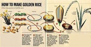 The Gmo Foods Controversy  What It Is And Why It U0026 39 S Wrong