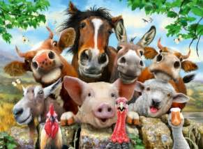 Farmyard Animal Wallpaper - farmyard selfie other animals background wallpapers on