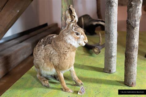 Gada putns, gada dzīvnieks - Talsu novada muzejs