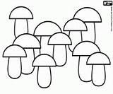 Coloring Mushrooms Plantation Mushroom Oncoloring Printable Drawing sketch template
