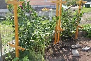 Tomaten Rankhilfe Selber Bauen : die obi selbstbauanleitungen garten pflanzen garten und garten hochbeet ~ A.2002-acura-tl-radio.info Haus und Dekorationen