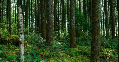 obstruction  justice   forest   trees