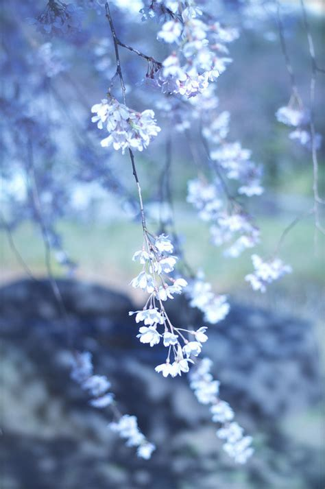 beautiful photography  tumblr