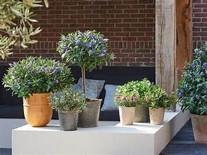 Plantes D Ombre Extérieur : plantes d ombre extrieur en pot great plante d exterieur ~ Melissatoandfro.com Idées de Décoration