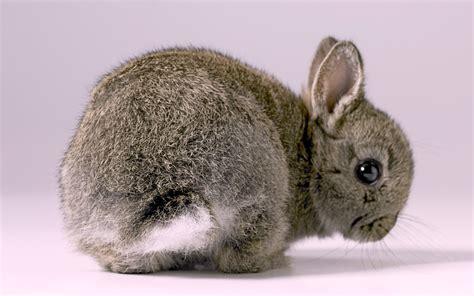 bunnies wallpaper  pictures