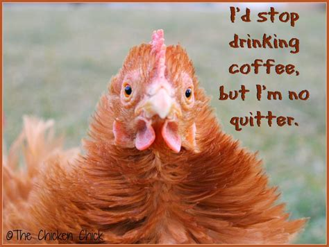 See more ideas about memes, funny memes, funny. Flock Focus Friday, 7/18/14   The Chicken Chick®