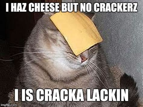 Cheese Meme - cats with cheese imgflip