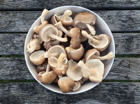grow your own mushrooms how to grow your own mushrooms 1 million women