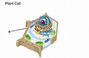 Cell Parts at Osbourn High School - StudyBlue