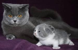 Was Brauchen Katzen : ditfutter fr katzen interesting mit schwein u angebote ~ Lizthompson.info Haus und Dekorationen