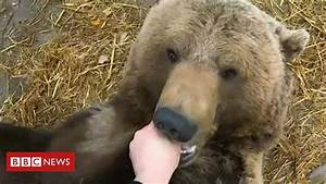 Russian Pilot U0026 39 S Special Relationship With Rescued Bear