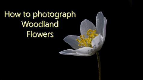 photography flowers  woodland macro photography