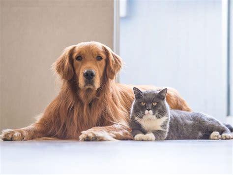 Cat-like dog breeds