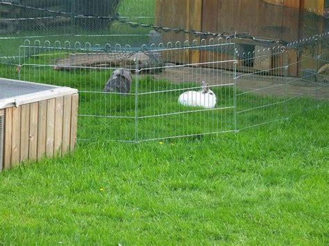 stall für kaninchen unser neue stall kaninchen