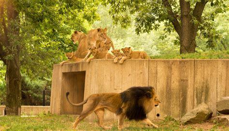zoo washington dc national
