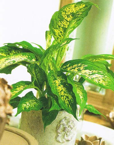 Vielas un augi, ar kuriem bērns var saindēties
